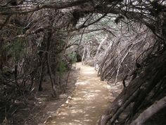 Trail to Jordan River... Gotta go check it out!