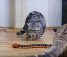 Remote Controlled Centipede Funny Cat/ Dog Toy