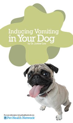 Inducing #Vomiting in Your #Dog by Dr. Justine Lee