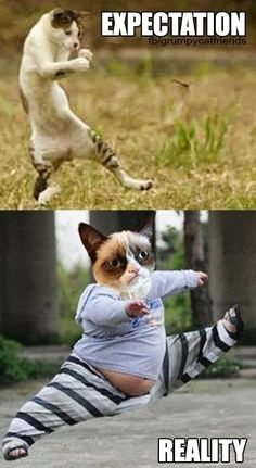 Grumpy Cat - Expectation and Reality