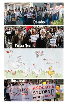 Marcia per la vita Romania 2014 Romania, Student, Baseball Cards, Sports, Movies, Movie Posters, The Gospel, Hs Sports, Films