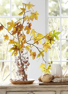 A tall clear vase or hurricane is a perfect vessel to show off a simple cutting of vine, Adding a showy branch  to the mix makes a nice fall embellishment for any corner. (no water needed)