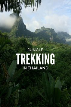 Trekking at night in the Thailand rainforest:
