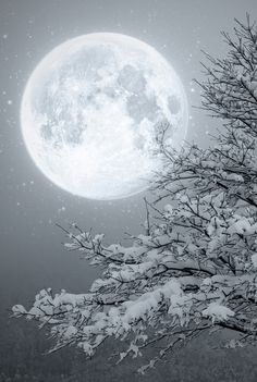 Winter Moon ~~ Moon light by Lupone Giovanna on Moon Moon, Big Moon, Luna Moon, Snow Scenes, Winter Scenes, Shoot The Moon, Winter Wonderland Christmas, Prim Christmas, Christmas Ideas