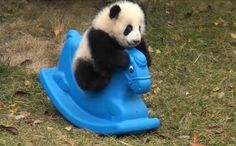 I'd have a nursery for baby pandas
