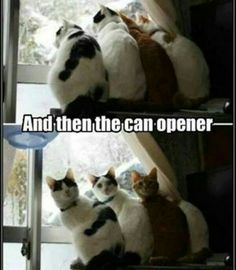 Hahahhahahhah