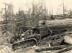 Old time Logging back in the early my husband cat logged. Antique Tractors, Old Tractors, Antique Trucks, Giant Tree, Big Tree, Logging Equipment, Heavy Equipment, Old Pictures, Old Photos