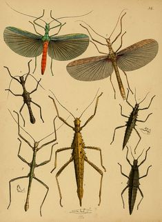 The cabinet of oriental entomology  1848