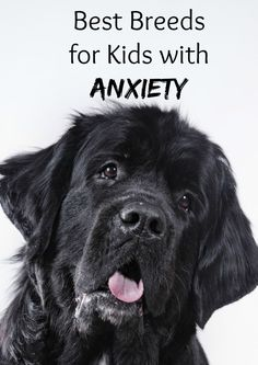 4 Best Dog Breeds for Kids with Anxiety - Best Dog Breeds for Kids with Anxiety – DogVills Thinking about getting a family friend to ease your child's fears and worries? Check out our picks for the best dog breeds for kids with anxiety! Dog Anxiety, Anxiety In Children, Anxiety Relief, Anxiety Help, Stress Relief, Service Dogs Breeds, Dogs And Kids, Best Puppies For Kids, Newfoundland
