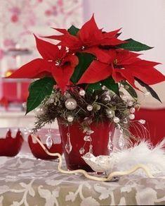 Poinsettia Gwiazda Betlejemska by Stars For Europe Poinsettia Plant, Christmas Poinsettia, Christmas Flowers, Christmas Wreaths, Christmas Crafts, Christmas And New Year, Christmas Wedding, Red Christmas, Christmas Time