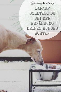 #Hunde || #Futter || Tipps || Hund || Ernährung || Hundefutter || Tricks || Wissenswertes || Ideen