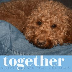 Dogs are naturals at sharing feel-good moments and happiness. Take a break and enjoy these feel-good words that dogs teach us daily. Words To Describe Love, Red Goldendoodle, Sleepy Eyes, Dog Quotes, Wild Animals, Dog Love, Cool Words, Feel Good, Cute Dogs