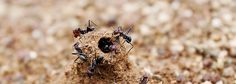 How to keep ants from invading your home