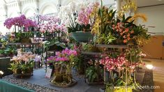 A fantastic gold medal-winning orchid display from Vacherot & Lecoufle at the RHS London Orchid Show 2016.