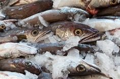 Safety for Imported Fish