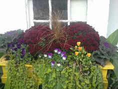 Red Mums, Winter Pansies, Lysimachia, Grass, Flowering Kale Winter Pansies, Flowering Kale, Fall Planters, Grass, Flowers, Plants, Red, Florals, Planters