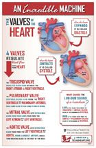 infographic about the heart valves, part of the incredible cardiovascular machine by Texas Heart Institute.Fun infographic about the heart valves, part of the incredible cardiovascular machine by Texas Heart Institute. Nursing School Notes, Medical School, Nursing Schools, Planning School, Heart Institute, Cardiac Nursing, Respiratory Therapy, Nursing Tips, Nursing Programs