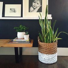 I'm getting in touch with my indoor green thumb today. Instead of using an expensive planter I gave this basket a little two-toned paint love. DIY tutorial on the blog. #linkinprofile #4men1lady #basketplanter #twotone #landgathome #lovisabench
