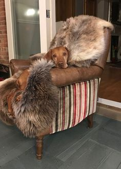 """What a lovely pic of Howard Burke's cheeky - and very smart - dog for stealing the best seating in the house ! Howard says """"As you can see, I'm still working on the dog training! Casual Living Rooms, Living Room Decor Cozy, Eclectic Living Room, Paint Colors For Living Room, Eclectic Decor, Living Room Designs, Ottoman In Living Room, Cabin Ideas"""