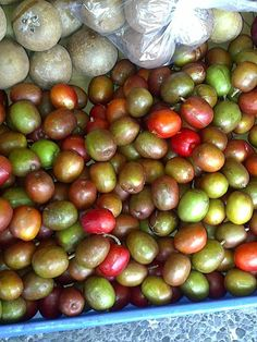 Hog Plum or Coolie Plum and Nasberry - yummy Jamaican Fruits