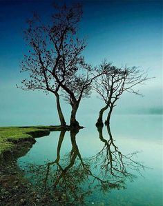 Trees and Reflections