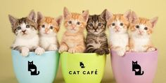 It's the purr-fect job for every cat lover.