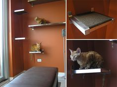 DIY Cat Climbing Shelves using Ikea shelves with carpet tiles glued on! I'm doing this!