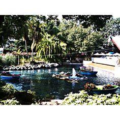 Dealchicken Tampa - Busch Gardens Africa