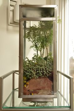 Why Hon File Cabinets Are The Only Option For Your Property Or Office Terrarium Bottle Garden, Glass Garden, Indoor Water Garden, Indoor Plants, Inside Garden, Home And Garden, Moss Plant, Garden Solutions, Terraria