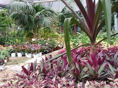 En nuestro centro podrás encontrar todas las plantas para que puedas tener el jardín más bonito. Garden Centre, Plants, Tropical Plants, Centre, Bonito, Fotografia, Plant, Planets