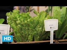 Tudo o que você precisa saber sobre como plantar baunilha