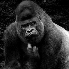 El álbum de nuestra familia primate | Ciencia | EL MUNDO