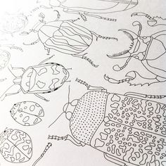 #Drawing beetles for a patterned page in my colouring book #Wildscapes