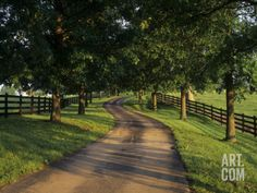 Tree-Lined Winding Road and Fences at First Light Between Pastures, Kentucky, USA Photographic Print by Adam Jones at Art.com