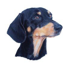Daschund - Charcoal and pastels on paper Tiffany Landale - Bespoke Portraiture -  www.foxkay.co.uk Arte Dachshund, Daschund, Charcoal, Dogs, Animals, Pastels, Bespoke, Tiffany, Paper