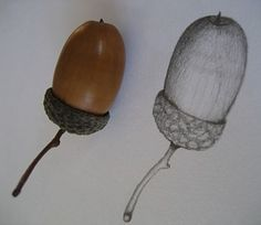 acorn drawing #art