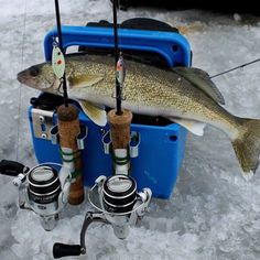 (via targetwalleye.com): How's that for a lunch box?! #TargetWalleye #Walleye #IceFishing