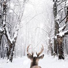 Animals 582301426789963932 - Canada paysage fond ecran neige fond d écran d hiver Source by celinepupat