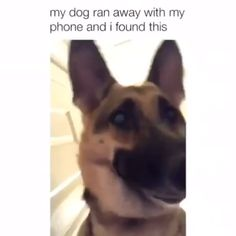 Do you consider you realize everything about our canine companions? Think again! - Do you consider you realize everything about our canine companions? Think again! Take a look at the - Cute Animal Memes, Funny Animal Quotes, Animal Jokes, Cute Animal Videos, Funny Animal Pictures, Dog Quotes, Hilarious Pictures, Animal Pics, Cute Funny Dogs