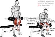 Dumbbell box squat instructions and videos - Real Time - Diet, Exercise, Fitness, Finance You for Healthy articles ideas Full Body Dumbbell Workout, Dumbbell Squat, Barbell Squat, Squat Workout, Leg Day Workouts, Weight Training Workouts, Training Videos, Squats Video, Bodybuilding Workouts