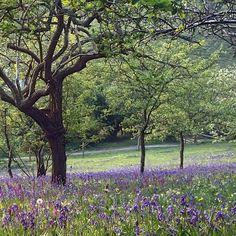 Kea plum orchard at Tregothnan, Cornwall Truro Cornwall, Cornwall England, Public Garden, Private Garden, St Michael's Mount, Gardens Of The World, Famous Gardens, Eden Project, Covent Garden