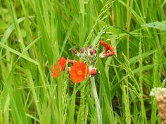 Cross Stitch, Flowers, Plants, Punto De Cruz, Seed Stitch, Cross Stitches, Plant, Royal Icing Flowers, Flower