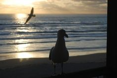 Sunset - We should soar in the Lord while we are resting in Him.