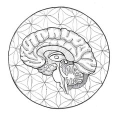 horus brain drawing