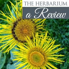 If you're passionate about using herbs in your life, this is an amazing resource full of so much useful information. I got to take my first look at the Herbarium and instantly fell in love.