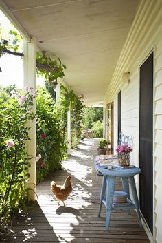 hens on the front porch...