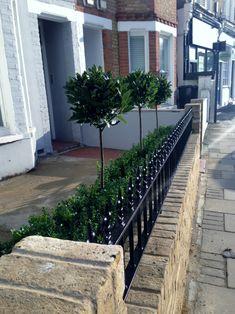 yellow brick garden wall metal rail and gate bay and buxus topiary clapham battersea balham london london garden design
