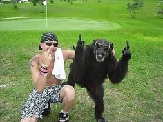 Last Party Chimp - Wherever this guy lives, he's apparently famous for this. Watch funny pet videos at http://www.yourpetclip.com