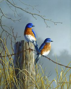 http://www.morningstarvillage.com/Bluebirds_Pair.jpg