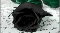 Wallpaper preto e roxo 27 ideas Gothic Wallpaper, Rose Wallpaper, Wallpaper Iphone Cute, Suffering In Silence, Picture Letters, Wearing All Black, Handwritten Letters, Belleza Natural, Beautiful Roses
